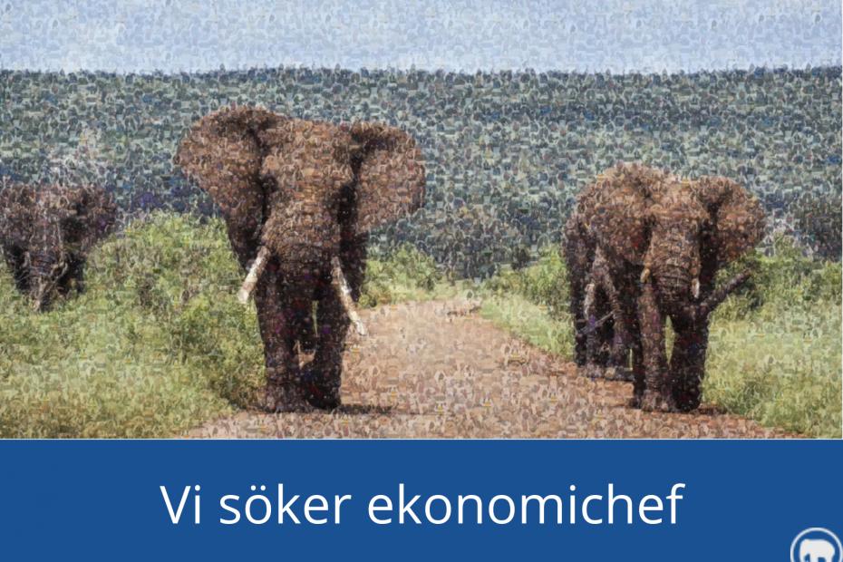 Elefanter och texten: Vi söker ekonomichef